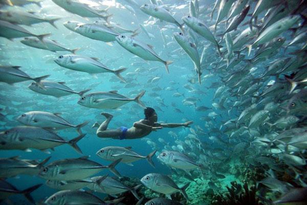 Khả năng lặn sâu giúp ngư dân Bajau có thể bắt được rất nhiều cá. Ảnh: Handout.
