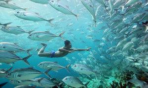 Bộ lạc người cá ở Indonesia có thể nhịn thở 13 phút, lặn sâu 70 m
