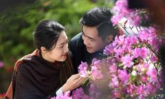 Ngắm hoa đỗ quyên trăm tuổi rực rỡ trên đỉnh Fansipan