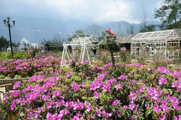 Lễ hội hoa Đỗ Quyên - Không gian văn hóa Tây Bắc năm nay trùng với thời điểm Sun World Fansipan Legend triển khai chương trình ưu đãi giá vé cáp treo và tàu hỏa leo núi Mường Hoa lên đến 70% cho người dân sáu tỉnh Tây Bắc.