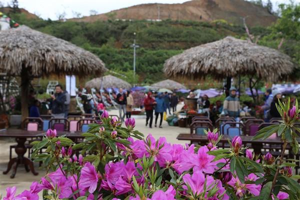 Để tôn vinh loài hoa quý của núi rừng Tây Bắc, từ năm 2017, Sun World Fansipan Legend đã tổ chức một lễ hội hoa Đỗ quyên - Không gian văn hóa Tây Bắc với nhiều hoạt động hấp dẫn. Năm nay, lễ hội tiếp tục diễn ra từ ngày 7/4 đến 1/5, thu hút hàng nghìn du khách đến thăm quan, thưởng ngoạn.