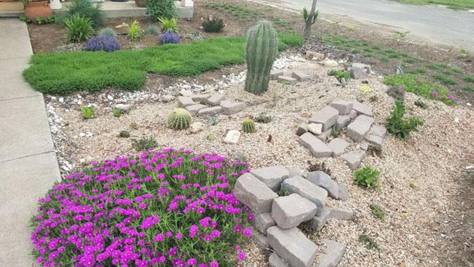 Người chồng tự học làm vườn vì ước nguyện của vợ quá cố - 11