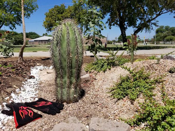 Người đàn ông đến từ phía nam Texas dần cảm thấy tự tin hơn với việc làm vườn sau một năm gặp người bạn hữu duyên kể trên. Anh đã học được nhiều điều từ bạn mình.