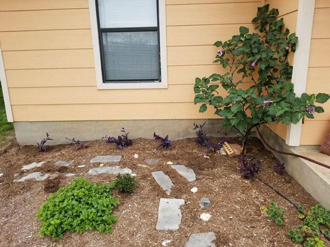 Không chỉ đem đến cho anh kiến thức, người bạn còn tặng khu vườn của anh nhiều cây. Mỗi sáng thức dậy, anh lại nhìn thấy những cây mới. Anh gọi đó là cây cổ tích.