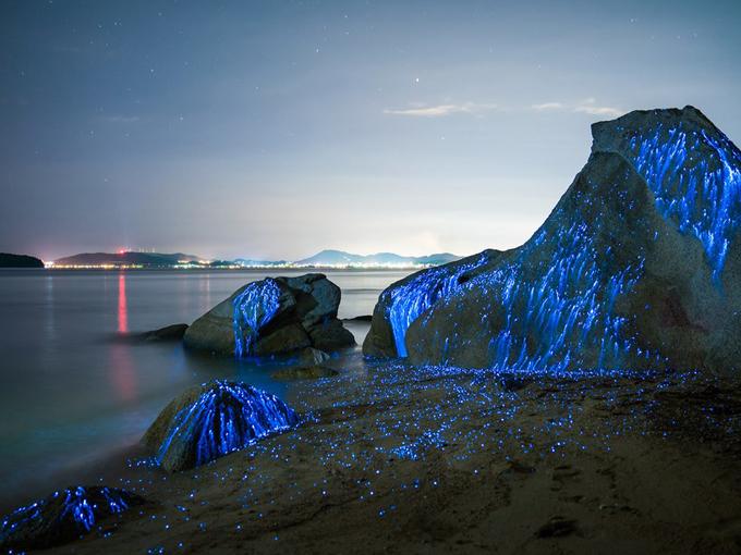 Bioluminescent Rocks, Okayama
