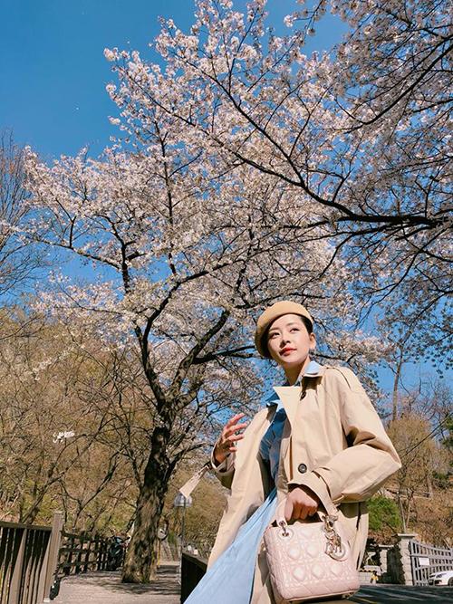 Cùng thời điểm, cô bạn thân tri kỷ một thời của Gil Lê - Chi Pu cũng có mặt tại Hàn Quốc. Cô có một bộ ảnh lãng mạn dưới con đường rợp bóng hoa anh đào.