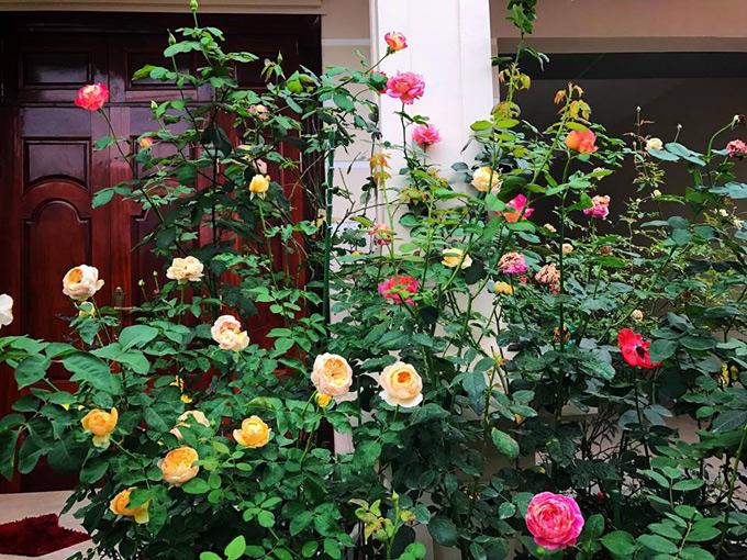 Chị Mai Linh bắt tay vào công việc chăm sóc hoa từ tháng 7/2017. Chị chia sẻ, bản thân đã thích hoa hồng từ lâu. Hơn nữa, loại hoa này còn vừa đẹp vừa thơm, biết cách chăm sóc thì hoa sẽ nở hết lứa này đến lứa khác, không theo mùa nên khiến chị đặc biệt yêu thích.