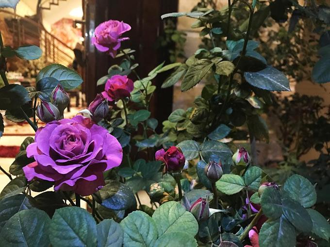 Chị Mai Linh mơ ước khi về già sẽ có tiền mua một mảnh đất rộng để trồng phủ kín hoa, coi đó là một thú vui tuổi xế chiều.
