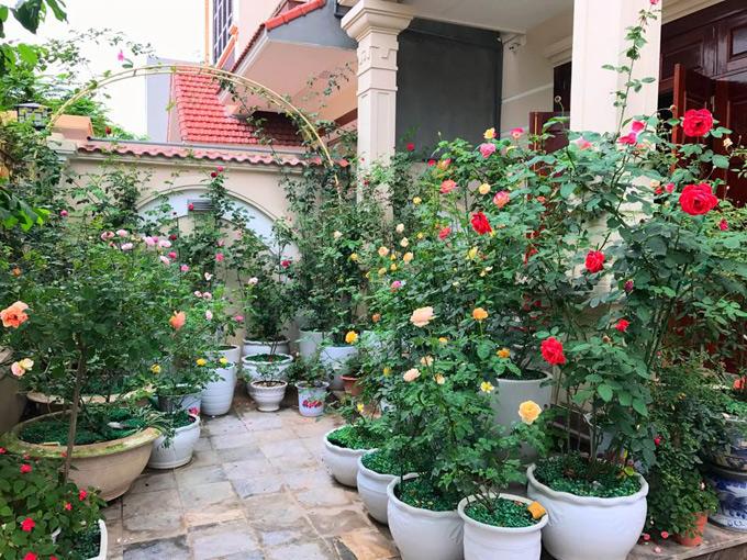 Bắt tay vào việc trồng các gốc hồng chỉ từ 5,6 cây cho đến nay vườn hồng nhà chị Mai Linh đã có đến 70 gốc hồng các loại.