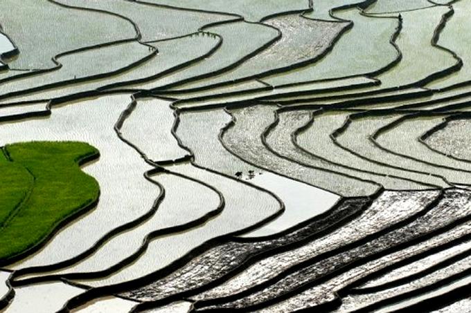 Mùa nước đổ ở Mù Cang Chải. Ảnh: Lekima Hung