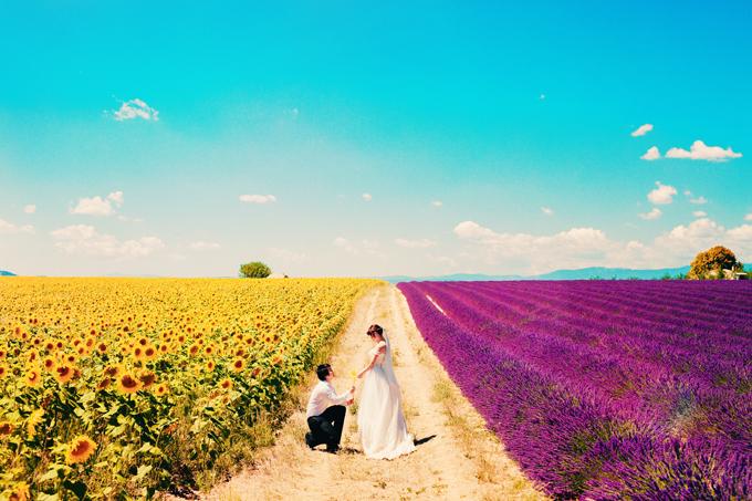 Nếu muốn chụp ảnh cưới ở những cánh đồng hoa lãng mạn, bạn cần chọn đúng thời điểm.