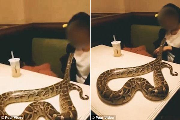 Nữ thực khách để con trăn nằm trên bàn và chơi với nó trước sự kinh ngạc của mọi người trong quán. Ảnh: Pear Video.