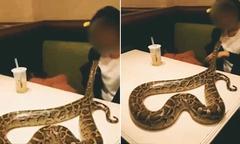 Khách bế trăn vào quán pizza, ông chủ ngất xỉu