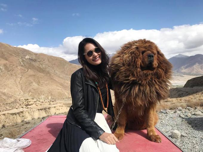 Chú chó ngao Tây Tạng lông xù đáng yêu rất thân thiện với khách du lịch.