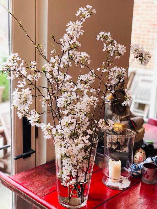 Sắc hoa đỗ quyên ngập vườn nhà Bằng Lăng ở Mỹ - 8