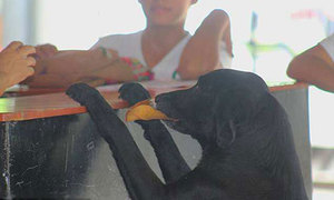 Chú chó bị bỏ rơi đổi lá lấy bánh quy để sống qua ngày