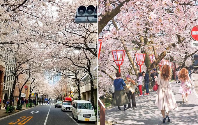 12 hình ảnh chứng minh đất nước Nhật Bản đến từ hành tinh khác - 11