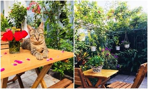 """Bà nội trợ Tây Ninh bài trí """"quán cafe mini"""" trong vườn hồng 10 m2"""