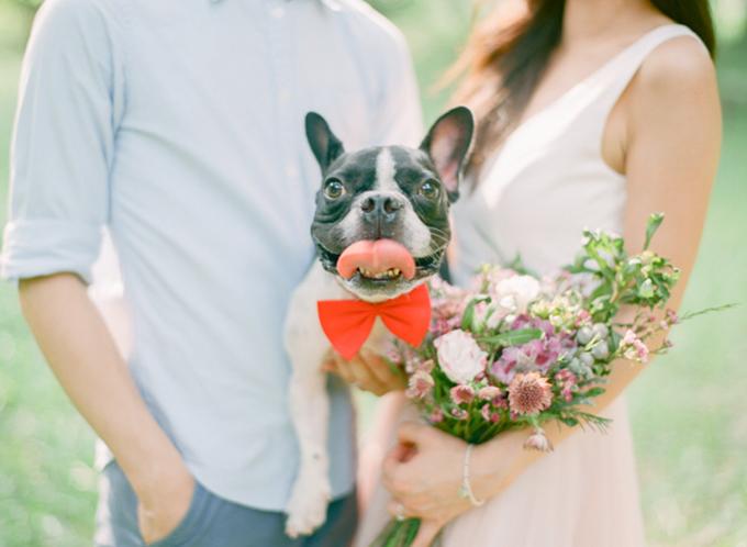 Thắt một chiếc nơ đỏ cho cún yêu là ý tưởng không tồi.