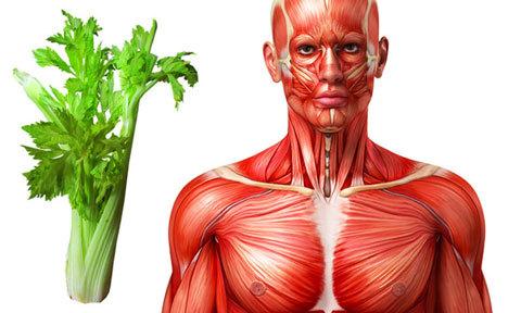 Điều xảy ra với cơ thể nếu bạn ăn cần tây thường xuyên