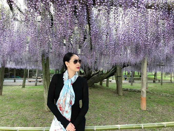 Tháng 5, Hà Kiều Anh cũng có dịp quay lại Nhật Bản và tìm tới công viên hoa tử đằng giống như Minh Hằng và nhiều sao Việt trước đó. Ở công viênAshikaga, có rất nhiều màu hoa khác nhau như xanh, vàng, tím, hồng, nhưng nhiều nhất là tím. Đặc biệt, ở đây có hai cây tử đằng màu tím cổ thụ có tán cây rộng bao phủ cảsân rộng. Hai cây cổ thụ này được bảo quản rất kỹ và là điểm check in mà bất kỳ ai đến công viên cũng phải tìm đến.