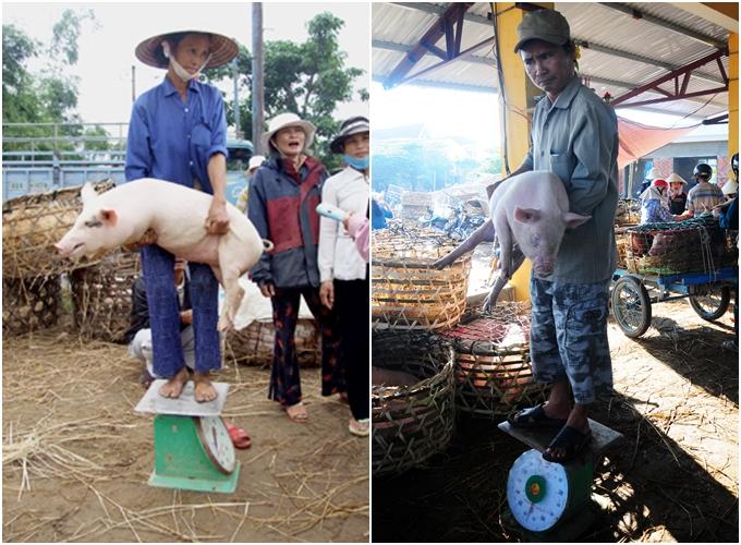 Khu chợ nơi lợn con được coi như thú cưng ở Quảng Nam, gây tò mò cho du khách - 1