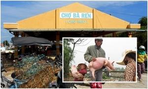 Khu chợ Quảng Nam nơi lợn được coi như thú cưng
