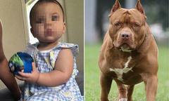 Bé 9 tháng ở Mỹ tử vong sau khi bị chó nhà cắn