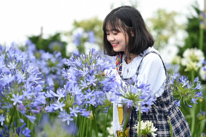 Vườn thanh anh tím biếc, cánh hoa to và nở rộ, là nơi các bạn gái trẻ thích thú, mải mê chụp ảnh.