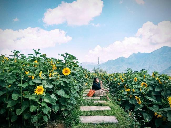 Cánh đồng hoa hướng dương đang gây náo loạn những ngày đầu hè. Ảnh: Nguyễn Thị Hoài Thương.