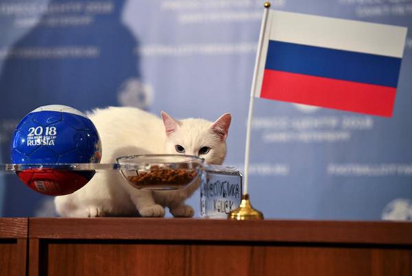 Mèo Achilles ăn bát thức ăn đặt cạnh lá cờ của Nga.