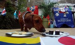 Chó Psychic đoán Nhật Bản hòa Colombia ở trận ra quân bảng H