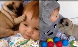 Tình bạn không tách rời của em bé và các chú cún