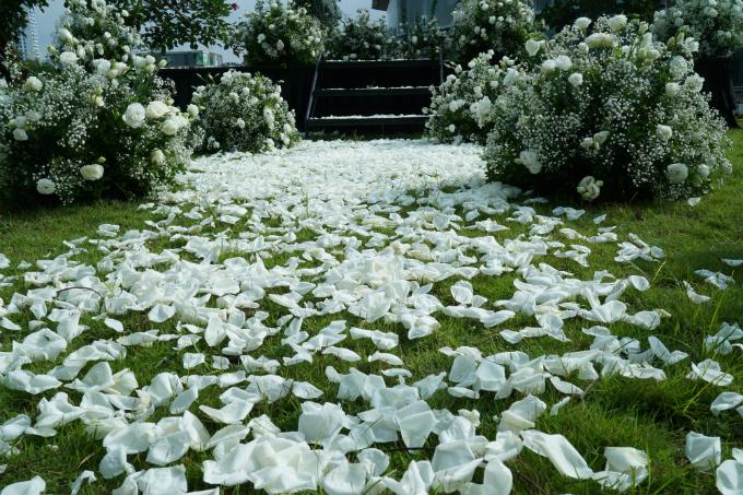 Đường tiến vào lễ đường của uyên ương được trải đầy hoa hồng trắng.