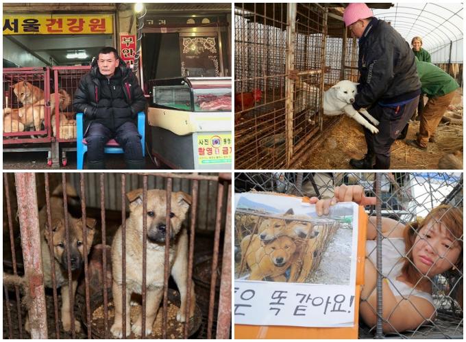 Người trẻ Hàn Quốc muốn xóa sổ văn hóa ăn thịt chó