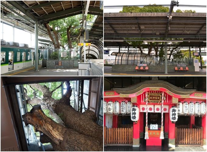 Trạm tàu điện ở Nhật né cây 700 tuổi - 1