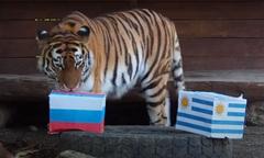 Hổ Nga đoán đội nhà sẽ đánh bại Uruguay