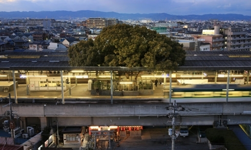 Ga tàu điện ở Nhật Bản 'né' cây 700 tuổi khi xây dựng