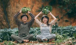 Ảnh cưới giữa cánh đồng bắp cải 'đốn tim' người xem