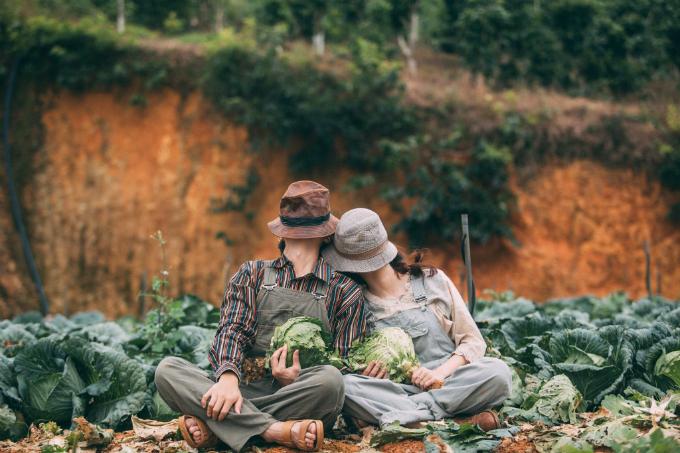 Tất cả bắp cải trên tay hai vợ chồng đều đượcchủ vườn thu hoạch từ trước.