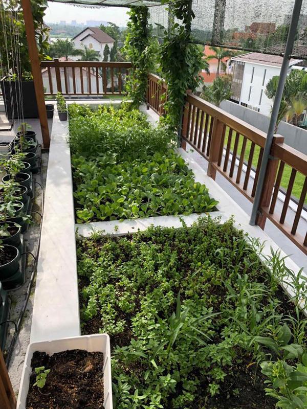 Cô trồng rau và cây xanh ở mọi khoảng trống trên sân thượng, quanh vườn nhà.