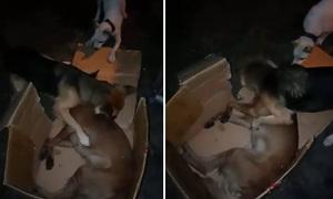 Chó liên tục lay, cố đánh thức người bạn đã qua đời