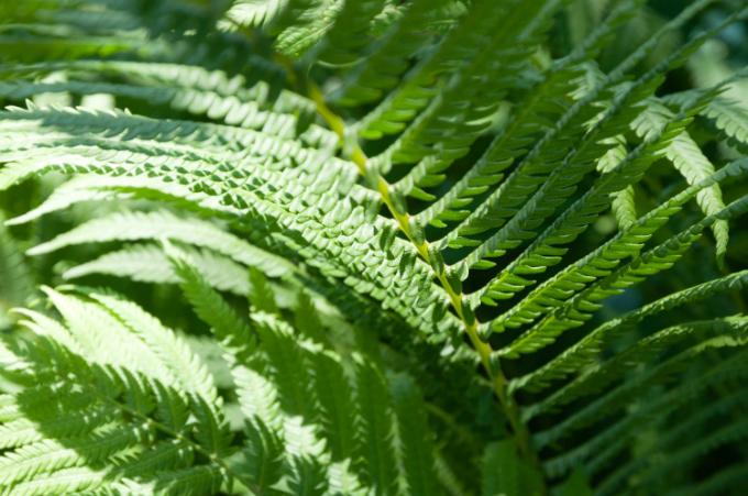 6 loại cây trồng trong nhà được ví như máy làm mát không khí - 3