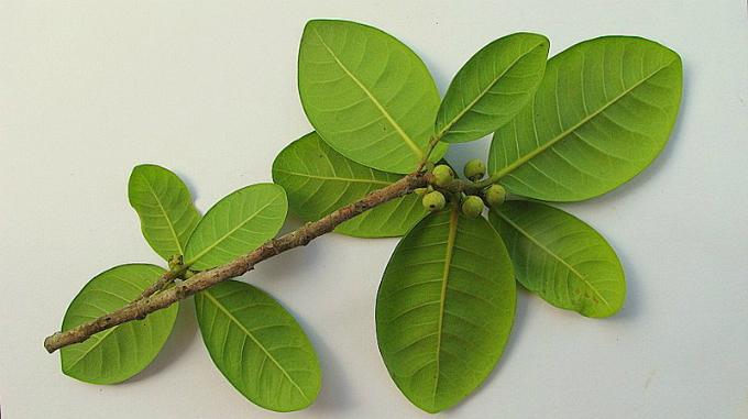6 loại cây trồng trong nhà được ví như máy làm mát không khí - 2