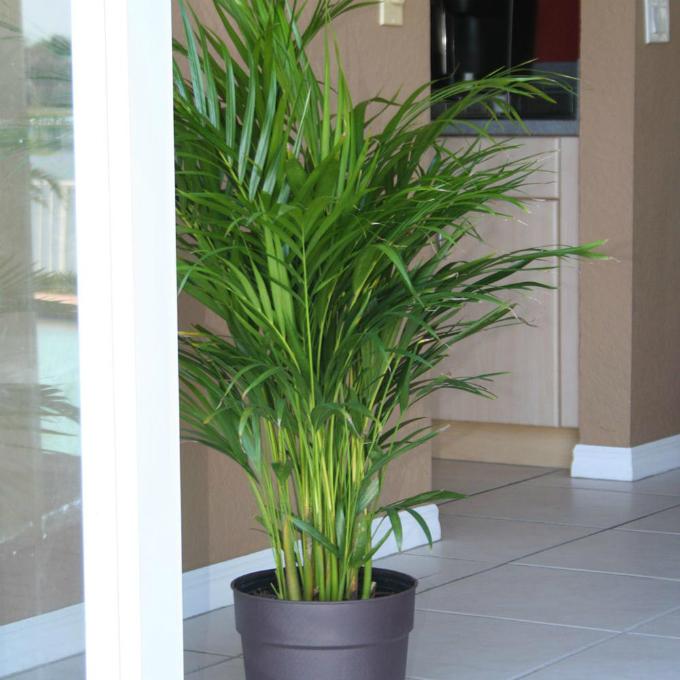 6 loại cây trồng trong nhà được ví như máy làm mát không khí - 1