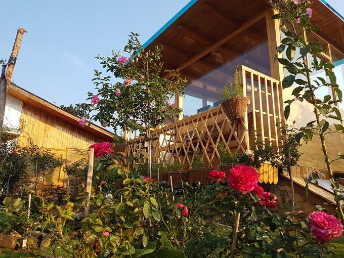 Gia đình Đà Lạt sống trong căn nhà gỗ giữa 2.000 gốc hồng - 6