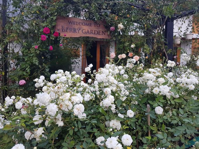 Khu vườn với hơn 2.000 gốc hồng thuộc 600 loại khác nhau của anh Đặng Ngọc Tạo ở Đà Lạt được đặt tên Berry, tên thật mật của cô con gái