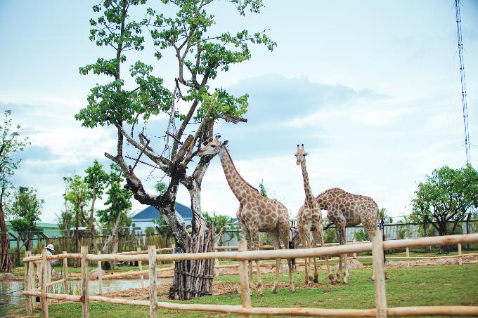 Bài 7: Có Gì Ở Trong River Safari Đầu Tiên Và Duy Nhất Tại Việt Nam? - 5