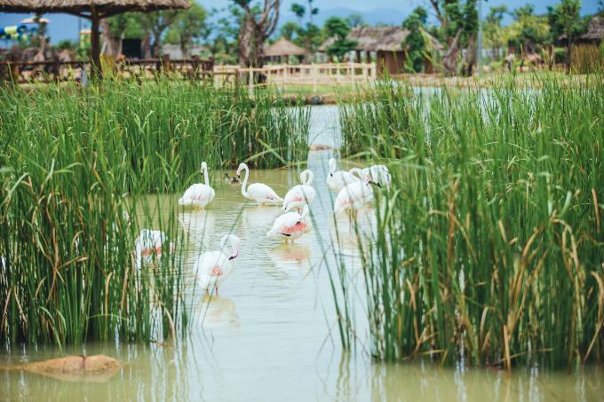 Bài 7: Có Gì Ở Trong River Safari Đầu Tiên Và Duy Nhất Tại Việt Nam? - 4