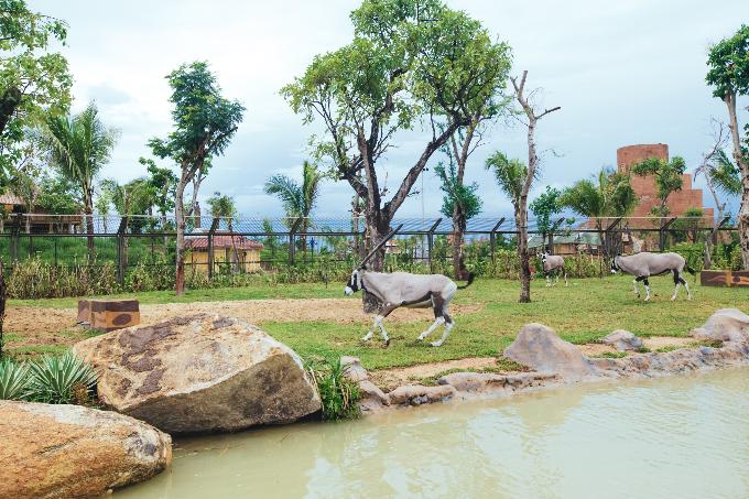 Bài 7: Có Gì Ở Trong River Safari Đầu Tiên Và Duy Nhất Tại Việt Nam?